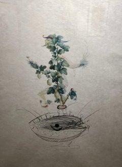 Reverence de Grosillier (Gooseberry)