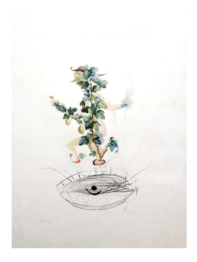 Salvador Dali - Currant's Reverence - Original Hand-Signed Lithograph - White Still-Life Print by Salvador Dalí