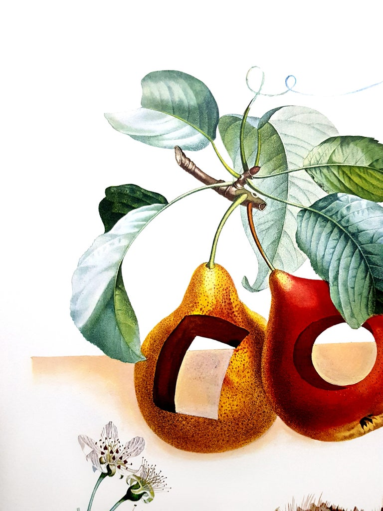 Salvador Dali - Fruits With Holes - Original Hand-Signed Lithograph For Sale 5