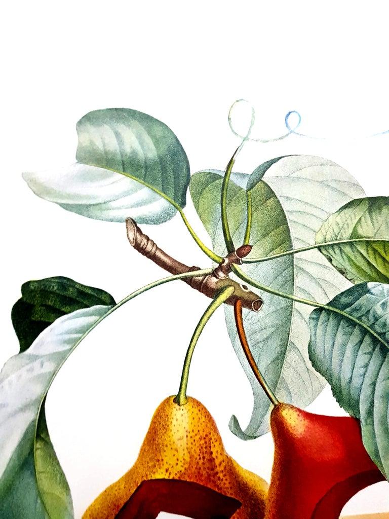 Salvador Dali - Fruits With Holes - Original Hand-Signed Lithograph For Sale 7