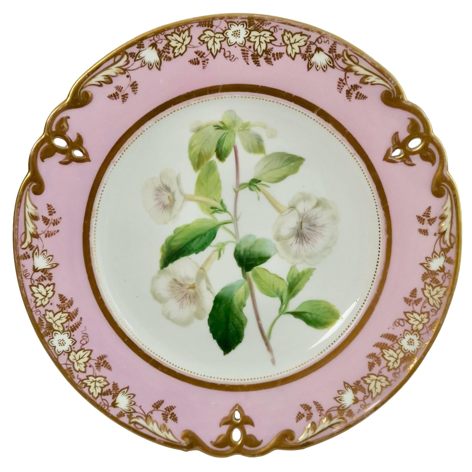 Samuel Alcock Porcelain Plate, Pink with White Achimenes, circa 1852 '1'
