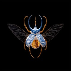 Atlas Beetle Open - 21st Century, Contemporary, Figurative, Print, Insect