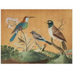 18th Century Samuel Dixon Gouache from 'Foreign and Domestick Birds'