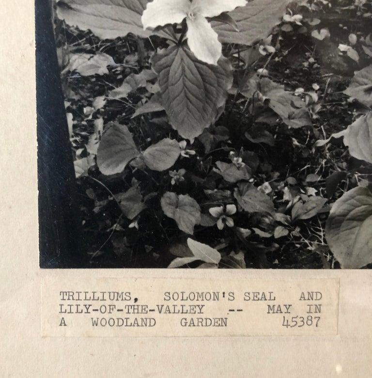 Vintage Silver Gelatin Signed Photograph Samuel Gottscho Garden Flowers Photo NY For Sale 1