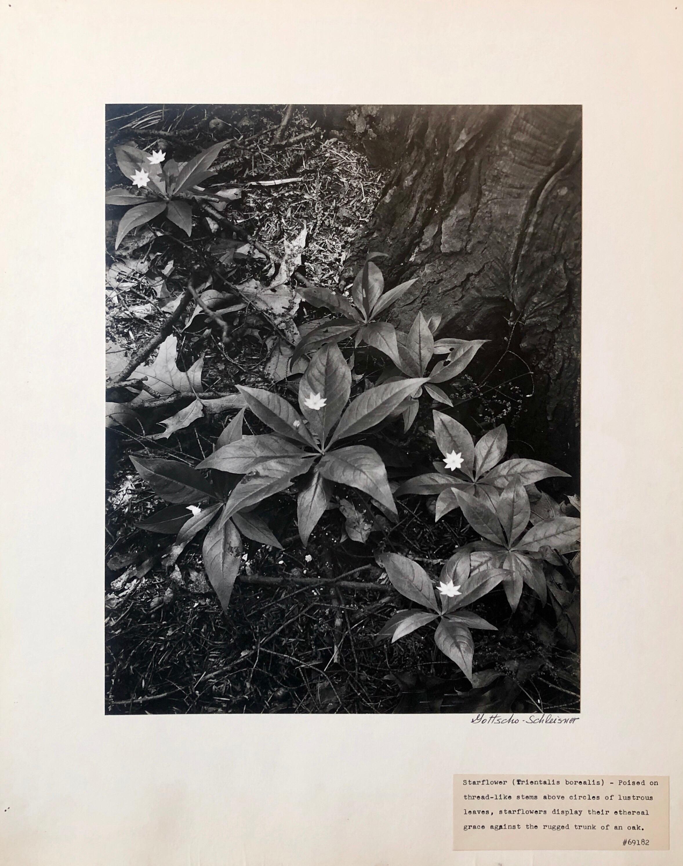 Vintage Silver Gelatin Signed Photograph Samuel Gottscho Garden Flowers Photo NY