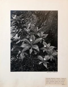 Vintage Silver Gelatin Signed Photograph Samuel Gottscho Garden Flowers Photo NY