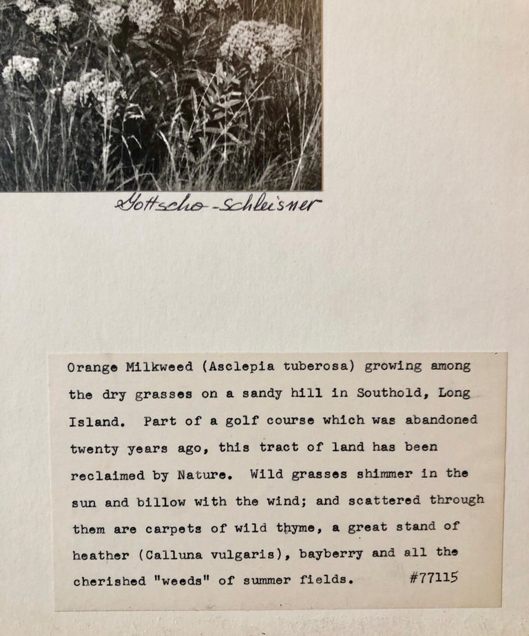 Vintage Silver Gelatin Signed Photograph Samuel Gottscho Garden Flowers Photo NY For Sale 2
