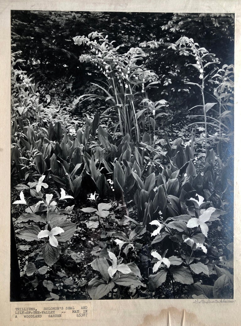 Vintage Silver Gelatin Signed Photograph Samuel Gottscho Garden Flowers Photo NY For Sale 3