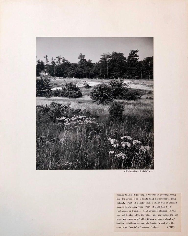 Vintage Silver Gelatin Signed Photograph Samuel Gottscho Garden Flowers Photo NY For Sale 4