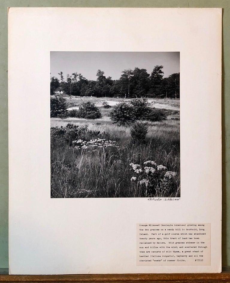 Vintage Silver Gelatin Signed Photograph Samuel Gottscho Garden Flowers Photo NY For Sale 5