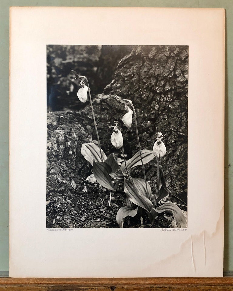 Vintage Silver Gelatin Signed Photograph Samuel Gottscho Garden Flowers Photo NY For Sale 5