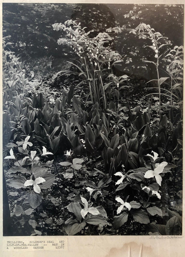 Vintage Silver Gelatin Signed Photograph Samuel Gottscho Garden Flowers Photo NY - Black Landscape Photograph by Samuel Gottscho