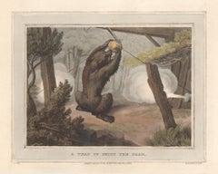 A Trap to Shoot the Bear, aquatint engraving hunting print, 1813