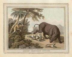 African Rhinoceros Hunting, antique African hunting engraving print, 1813