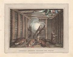 American Anecdote Shooting the Wolves, aquatint engraving hunting print, 1813