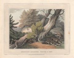 American Anecdote - Wolves & Boy, aquatint engraving hunting print, 1813