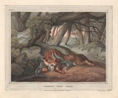 German Wolf Trap, aquatint engraving field sport hunting print, 1813