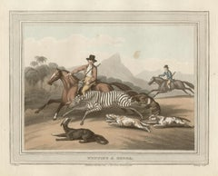 Hunting a Zebra, African hunting engraving print, 1813