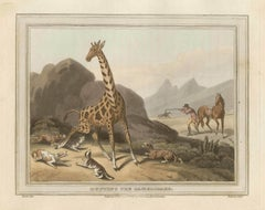 Hunting the Camelopard (Giraffe), antique African hunting engraving print, 1813