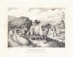 Jackdaw and Ram, antique animal sheep fable etching by Samuel Howitt
