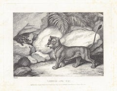 Lioness and Fox, antique animal fable etching by Samuel Howitt
