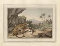 Shooting a Leopard, antique African safari hunting engraving print, 1813