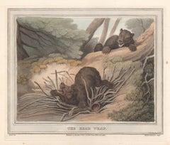 The Bear Trap, aquatint engraving hunting print, 1813