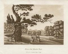 Hermes Oak, Windsor Park, late 18th century English sepia aquatint, 1799