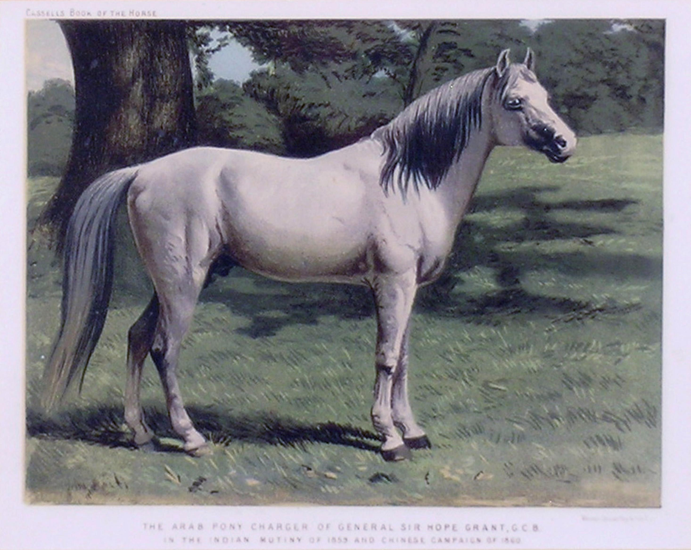 Samuel Sidney The Arab Pony Charger For Sale At 1stdibs