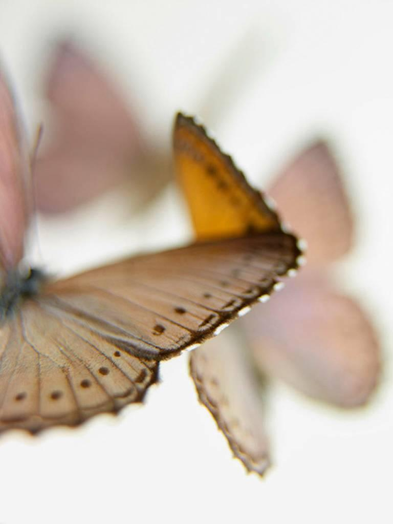 Sandi Fellman Still-Life Photograph - Deception #53
