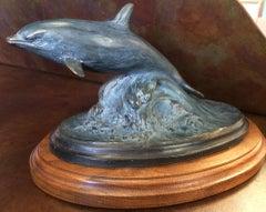 Dolphin Study