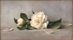 White Camelias (Camelia blossoms, velvet texture, white, elegance)