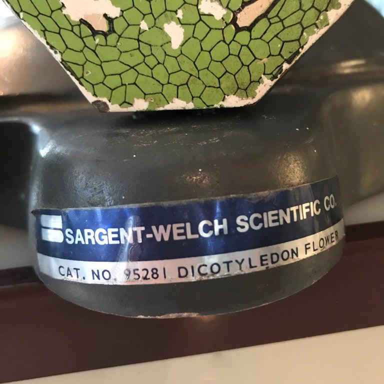 Sargent-Welch Scientific Flower Botanical Model 2