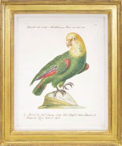 MANETTI. A Group of Six Parrots