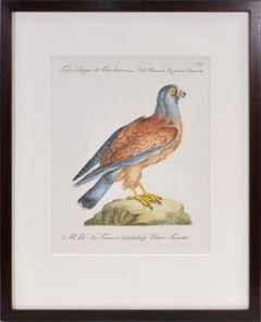 Manetti, Group of Six Birds of Prey, hand coloured engravings, 1776