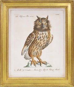 Manetti, Group of Six Owls, hand coloured engravings, 1776