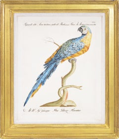 Manetti, Group of Six Parrots, hand coloured engravings, 1776