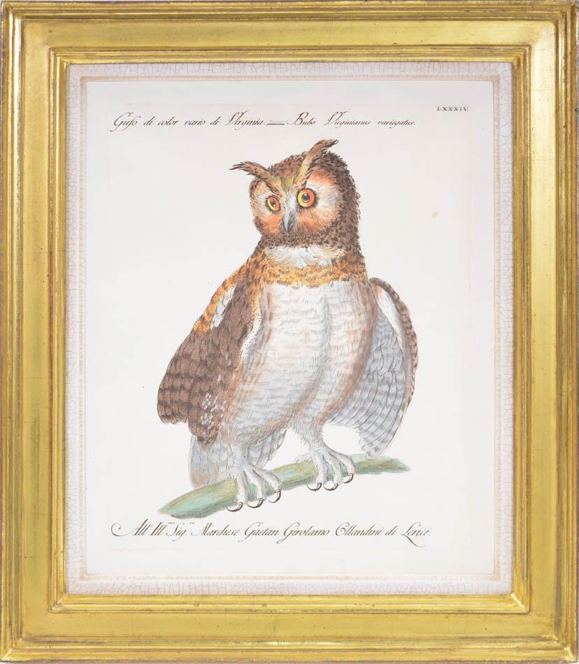 MANETTI & LORENZI & VANNI. A Group of Six Owls