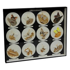 School Teaching Display Butterflies and Moths and Their Caterpillars