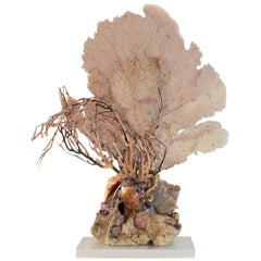 Sculptural Sea Fan with Amethyst and Shells on Agatized Coral and Lucite Base