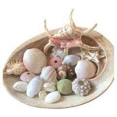 Sea Shell Collection in a Japanese Ceramic Shell Bowl