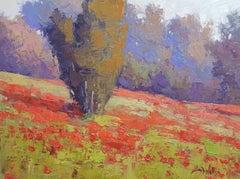 Evening Poppies (fields, poppies, vibrant)