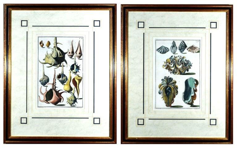 Georgian Seashell Engravings by Niccolo Gualtieri, 1742 'Pair' For Sale