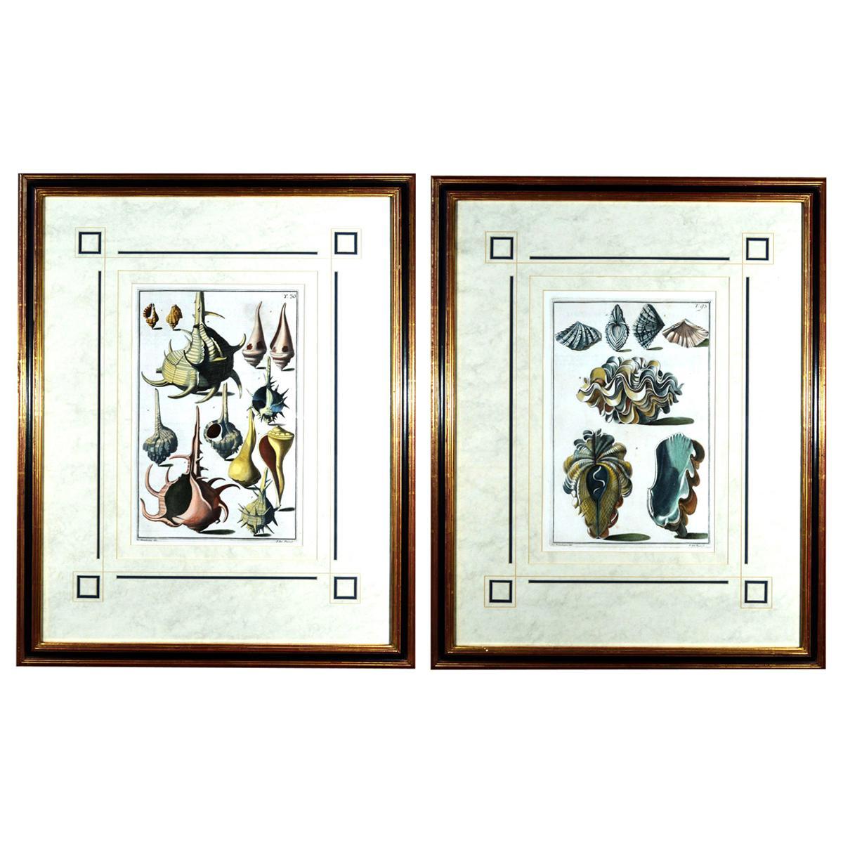 Seashell Engravings by Niccolo Gualtieri, 1742 'Pair'
