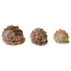 Seashells Sea Shells