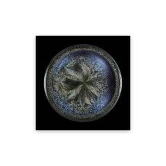 Morphogenetic field - Beluga Caviar (Medium) (Abstract Photography)