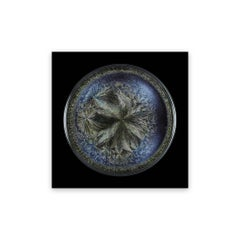 Morphogenetic field - Beluga Caviar (Medium)
