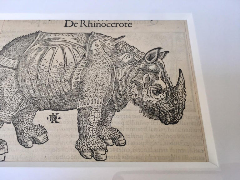 German Sebastian Münster 16th Century Woodcut  Print Animal Exotics For Sale