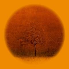 Season Tree IV Orange