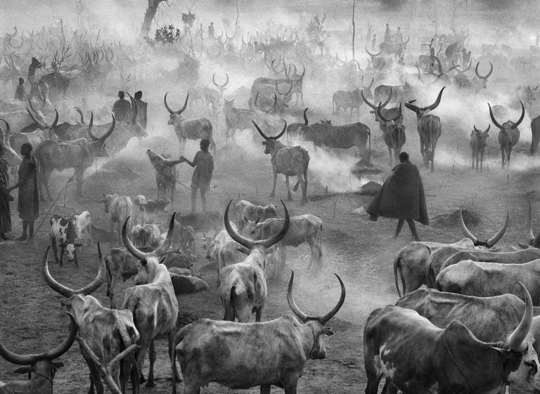Dinka Cattle Camp of Amak, Southern Sudan, 2006 - Sebastião Salgado  - Photograph by Sebastião Salgado